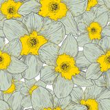 Seamless pattern with narcissus. Vector illustration. Seamless pattern with narcissus. Vector illustration fpr your design Stock Photography