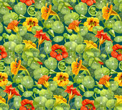 Seamless pattern with nasturtium flowers and leaves painted with watercolor. Seamless pattern with red and yellow nasturtium flowers and leaves painted with Stock Photography