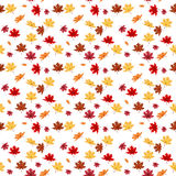 Seamless Pattern From Natural Maple Leaves. Vector Illustration. Royalty Free Stock Images