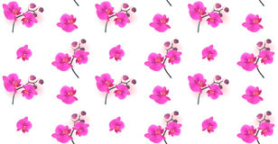Seamless Pattern Naturalistic Beautiful Colorful Pink Orchid.Vec Royalty Free Stock Photo