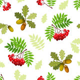 Seamless pattern with oak and rowan branches, leaves and berries. Vector illustration. Royalty Free Stock Photography