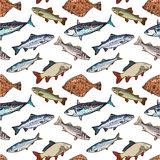 Seamless Pattern Of Sketch Style Sea Fish, Vector Illustration Royalty Free Stock Image