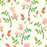 Seamless pattern with officinal brier. Fruits and flowers Royalty Free Stock Photography