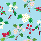 Seamless pattern with officinal hawthorn Stock Images