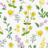 Seamless pattern of officinal herbs Royalty Free Stock Photography