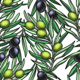 Seamless pattern with olive branch Stock Image