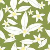 Seamless pattern of orange blossom flowers vector illustration