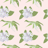 Seamless pattern with Orange Blossom. Stock Photos