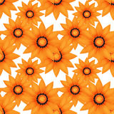 Seamless pattern with orange flowers Stock Photos