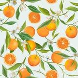 Seamless Pattern. Orange Fruits Background Royalty Free Stock Image