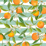 Seamless Pattern. Orange Fruits Background. Floral Pattern Stock Photography