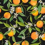 Seamless Pattern. Orange Fruits Background. Floral Pattern Stock Images