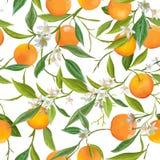 Seamless Pattern. Orange Fruits Background. Floral Pattern Stock Image