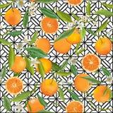 Seamless Pattern. Orange Fruits Background. Floral Pattern Stock Photos