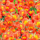 Seamless pattern of orange lily flowers Stock Photography