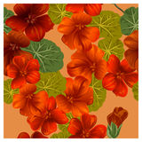Seamless pattern with orange nasturtium flowers. Vector illustration Royalty Free Stock Photography