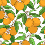 Seamless pattern with oranges Stock Photo