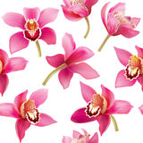 Seamless pattern with orchid Royalty Free Stock Photo