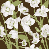 Seamless pattern with orchids Royalty Free Stock Photography