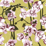 Seamless pattern with orchids. On beige background Stock Photo