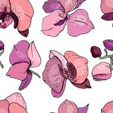Seamless pattern with orchids. Stock Photography