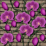 Seamless pattern with orchids Royalty Free Stock Image