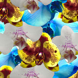 Seamless pattern with orchids Royalty Free Stock Photo