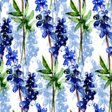 Seamless pattern with original wild flowers Royalty Free Stock Photography