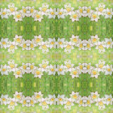 Seamless pattern with ornate narcissus flower or daffodil on the green background. Royalty Free Stock Photos