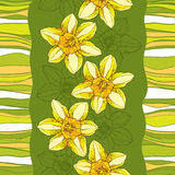 Seamless pattern with ornate narcissus flower or daffodil on the green background with stripes. Stock Images