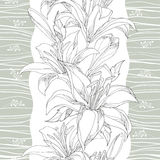Seamless pattern with ornate white Lily flower, buds and leaves on the white background with gray stripes. Elegance floral background with lilies in contour stock illustration