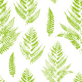 Seamless pattern with paint prints of fern Stock Photography