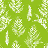 Seamless pattern with paint prints of fern Royalty Free Stock Image