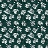 Seamless pattern with palm leaf. Tropical backdrop royalty free illustration