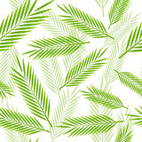 Seamless pattern with palm leaves Royalty Free Stock Image