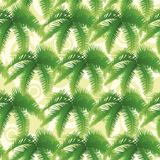 Seamless pattern, palm leaves Royalty Free Stock Photos