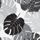 Seamless pattern with palm leaves. Monochrome background. Royalty Free Stock Photography