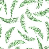 Seamless pattern with palm leaves. Tropical jungle plants. Woody natural rainforest vector illustration