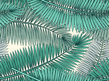 Seamless pattern with palm leaves in sketch style Royalty Free Stock Images