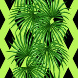 Seamless pattern with palms leaves. Decorative image tropical leaf of palm tree Livistona Rotundifolia. Background made Royalty Free Stock Image
