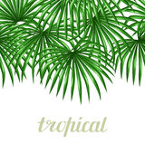 Seamless pattern with palms leaves. Decorative image tropical leaf of palm tree Livistona Rotundifolia Royalty Free Stock Images