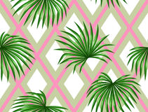 Seamless pattern with palms leaves. Decorative image tropical leaf of palm tree Livistona Rotundifolia Stock Image
