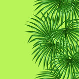 Seamless pattern with palms leaves. Decorative image tropical leaf of palm tree Livistona Rotundifolia Royalty Free Stock Photography