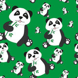 Seamless pattern of pands. On green background Stock Photos
