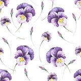 Seamless pattern with pansies. Hand draw watercolor illustration Royalty Free Stock Photos