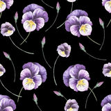 Seamless pattern with pansies. Hand draw watercolor illustration Royalty Free Stock Images