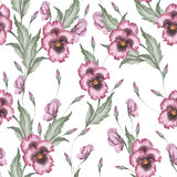 Seamless pattern with pansies. Hand draw watercolor illustration Royalty Free Stock Image