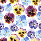 Seamless pattern with pansy flowers. Floral seamless pattern.Pansy flowers.Watercolor hand drawn illustration.Violets on a white background Royalty Free Stock Photos
