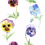 Seamless pattern with pansy flowers. Floral seamless pattern.Pansy flowers.Watercolor hand drawn illustration.White background Stock Image