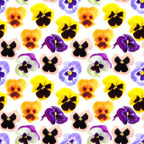 Seamless pattern of pansyes flowers royalty free stock images